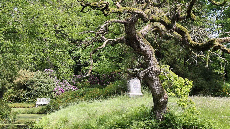 Baum Trauer